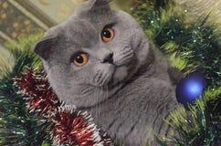 En grå katt Fotografering för Bildbyråer