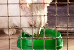 En grå katt i en bur äter torr mat från en bunke arkivfoton
