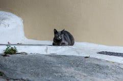 En grå katt vilar i trottoar Arkivfoto