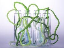En grön bomullskabel i flaska Royaltyfri Bild