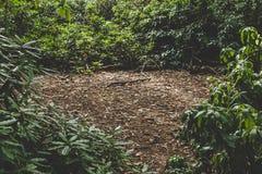 En grön förtrollad skog fotografering för bildbyråer