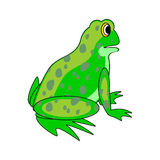 En grön groda för rolig tecknad film Royaltyfri Fotografi