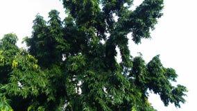 En grön grop av ett träd Arkivfoton