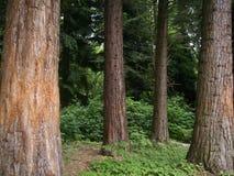 En grön mörk skog på sommar Bochum NRW, Tyskland royaltyfri fotografi