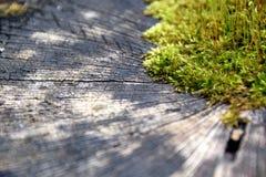 En grön mossa som växer i mitt av en journal Royaltyfri Bild