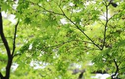 En grön sikt av skogen Arkivbilder