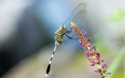 En grön slända som hänger på en blomma royaltyfri fotografi