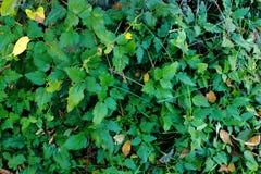 En grön växt med rundade sidor, en lek av ljus och skugga arkivfoto