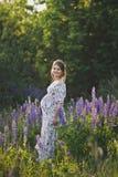 En gravid flicka går till och med det blommande lupine fältet 1680 royaltyfri foto