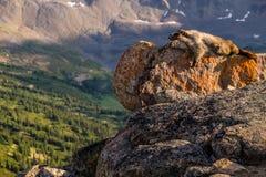 En grånad murmeldjur blöter solen på en av de skalliga kullarna når en höjdpunkt upp I Arkivbilder