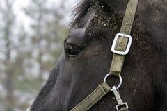 En gros plan d'une tête de cheval Photo libre de droits