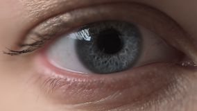 En gros plan du gris - yeux bleus d'une jeune femme sans maquillage, foyer sélectif, yeux de clignotant directement dans clips vidéos