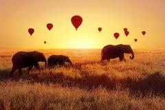 En grupp av afrikanska elefanter mot himlen med ballonger på solnedgången Afrikansk fantastisk bild Afrika Tanzania, Serengeti Na arkivfoto