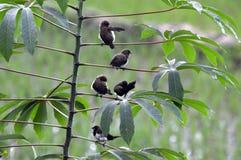 En grupp av birdling tycker om solen arkivfoto