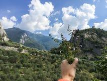 En grupp av den alpina mintkaramellen italy Arkivfoton