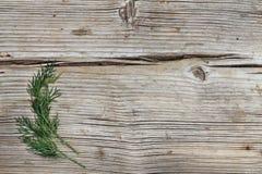 En grupp av dill på en träbakgrund Begrepp: vegetarisk mat, sund matlagning fotografering för bildbyråer