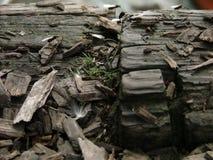 En grupp av flygmyror på woodchips Royaltyfri Fotografi