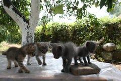 En grupp av fyra lilla kattungar undersöker försiktigt världen runt om dem med deras ögon royaltyfri foto