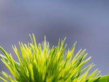 En grupp av gräs Arkivfoton