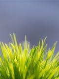 En grupp av gräs Fotografering för Bildbyråer