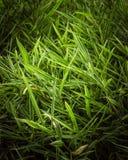 En grupp av gröna bambusidor arkivfoton