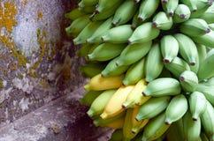 En grupp av gröna bananer Royaltyfri Foto