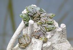 En grupp av grodor värmas Royaltyfri Foto