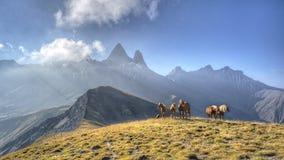 En grupp av hästar i en äng framme av de Aiguille d'Arvesna M Arkivfoton