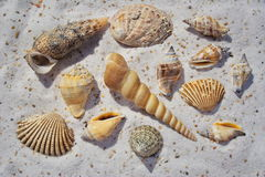 En grupp av havsskal i sanden Royaltyfria Foton