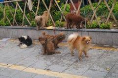 En grupp av hundkapplöpning Royaltyfri Foto