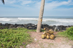 En grupp av kokosnötter på jordningen Arkivbilder