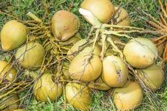 En grupp av kokosnötter på jordningen Royaltyfri Fotografi