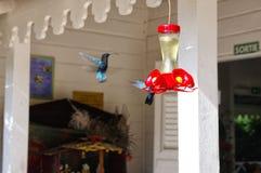 En grupp av kolibrier arkivbilder
