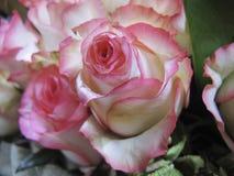 En grupp av konstgjorda rosor royaltyfria bilder