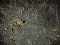 En grupp av krypet som klibbas i en rengöringsduk för spindel` s, har gjort en abstrakt modell Arkivfoton