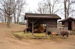 En grupp av lantgårddjur arkivfoto
