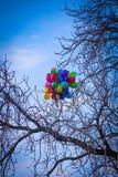 En grupp av ljusa kulöra ballonger som klibbas på ett träd i Prague royaltyfria foton