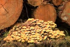 En grupp av ljust, guling-apelsin champinjoner på ett träd med grön mossa royaltyfria foton