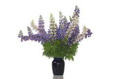 En grupp av lupines blommar på vasana Arkivbild