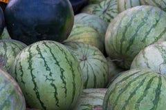 En grupp av mogna vattenmelon Jordbruks- kultur av Ukraina arkivfoton
