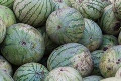 En grupp av mogna vattenmelon Jordbruks- kultur av Ukraina royaltyfri bild