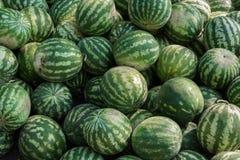 En grupp av mogna vattenmelon Jordbruks- kultur av Ukraina royaltyfria foton