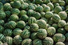En grupp av mogna vattenmelon Jordbruks- kultur av Ukraina arkivfoto