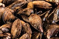 En grupp av musslor f?r matst?lle arkivbilder