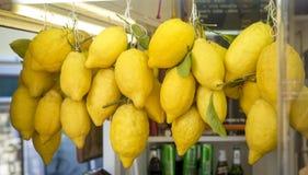 En grupp av nya citroner på den Capri ön i Italien Royaltyfria Foton