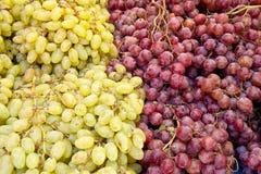 En grupp av nya organiska vita och röda druvor Arkivfoto