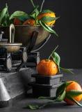 En grupp av nya saftiga clementines med gräsplansidor i en skala Royaltyfria Bilder