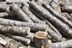 En grupp av nytt klippta trädstammar Royaltyfri Foto