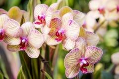 En grupp av orkidér Royaltyfria Bilder