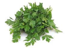 En grupp av parsley royaltyfri bild